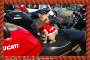 IV Raduno FIAT 500 maggio 2013